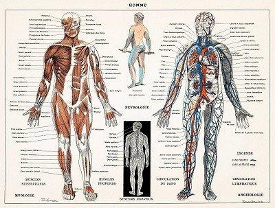Musculoskeletal simulation